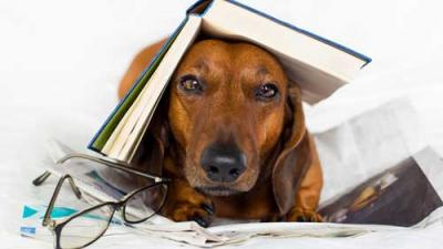 Photo of a tired looking dog hiding under a book with glasses nearby.