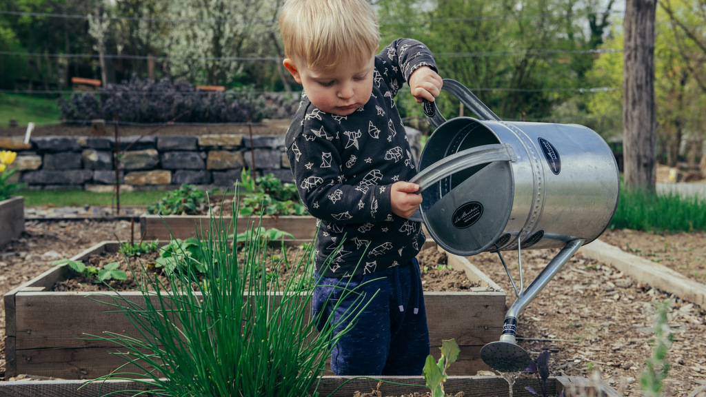 Small boy holding large watering can over plants